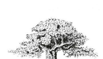 Arne L Persson - För trädets skull